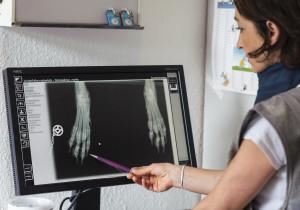 Digitales Röntgen in der Tierarztpraxis Rosenthal