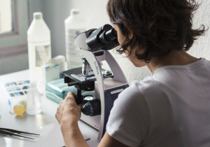 Probenanalyse unter dem Mikroskop